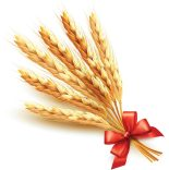 wheat-vector-11