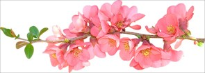 floral11111
