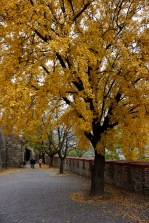 bratislava-herfst