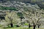 Vale do Jerte - Espanha