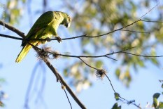 Ibirapuera-birdwatching-abr16_01