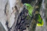 Ibirapuera-birdwatching-abr16_03