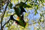 Ibirapuera-birdwatching-abr16_04