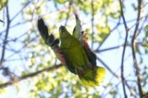 Ibirapuera-birdwatching-abr16_08