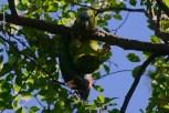 Ibirapuera-birdwatching-abr16_16