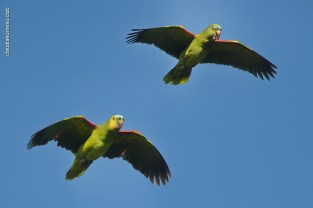 Ibirapuera-birdwatching-abr16_19