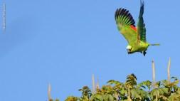 Ibirapuera-birdwatching-abr16_23