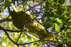 Ibirapuera-birdwatching-abr16_27