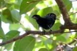 Ibirapuera-birdwatching-abr16_31
