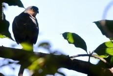 Ibirapuera-birdwatching-abr16_39
