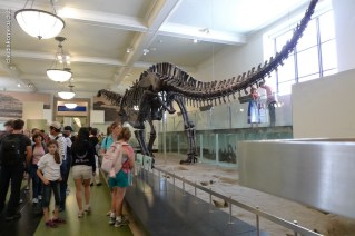 American-Museum-of-Natural-History_16