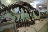American-Museum-of-Natural-History_17