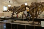 American-Museum-of-Natural-History_20