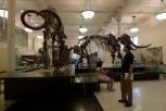 American-Museum-of-Natural-History_21