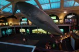 American-Museum-of-Natural-History_22