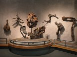 Denver-Museum-Nature-Science_20