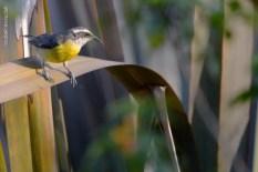 parque-do-ibirapuera_aves_15