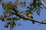 parque-do-ibirapuera_aves_23