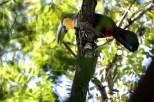 parque-do-ibirapuera_aves_44