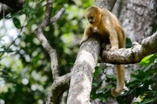 macaco-prego-galego_106