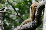 macaco-prego-galego_114