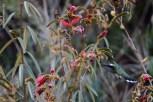 aves_campos-do-jordao_35