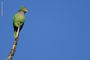 aves_campos-do-jordao_59