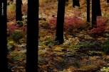 yosemite-outono_11