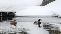 natureza-neve_25