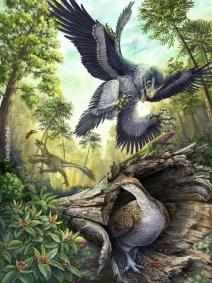 beakedbirdsc