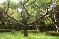 arbres (Tokyo)