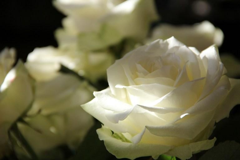 roses-108132_1920
