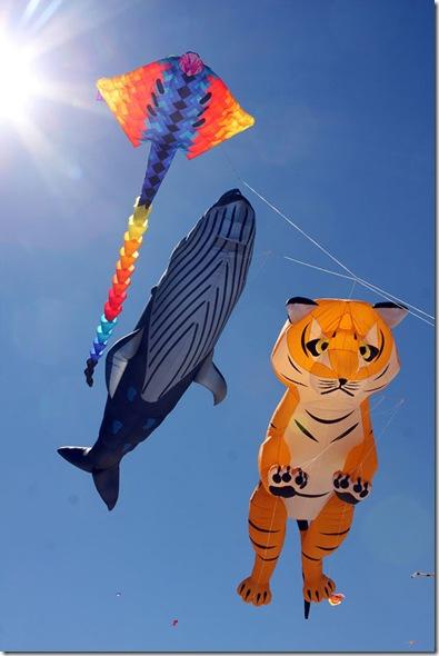 bondi-beach-festival-of-the-winds-2012-australia-NSW