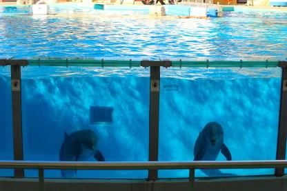 VERY NICE dolphin show