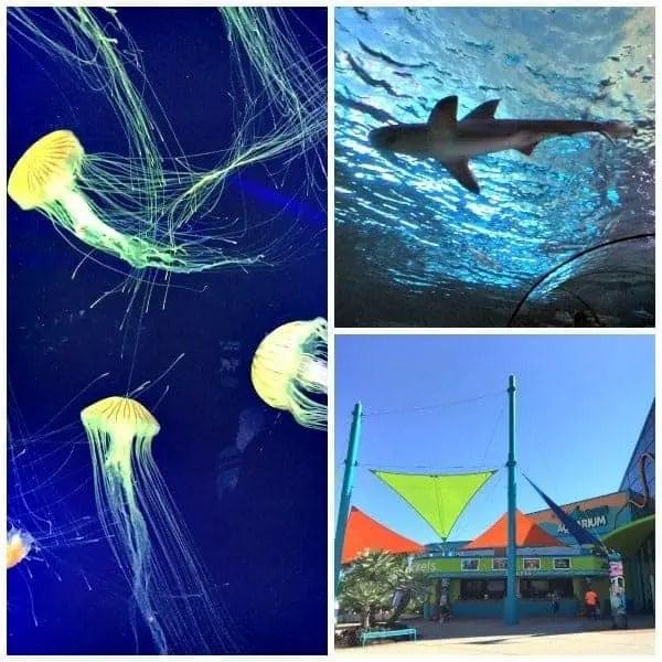 myrtle beach ripley's aquarium