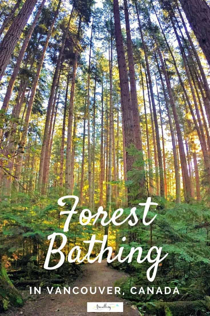 Forest bathing in Vancouver is easy and accessible to health conscious travellers. All you need is a pair of walking shoes and desire to get back to nature. | #forestbathing #vancouver #nature #explorebc #canada
