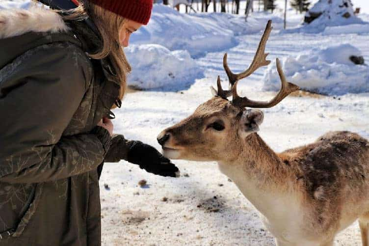 woman feeding deer at parc omega