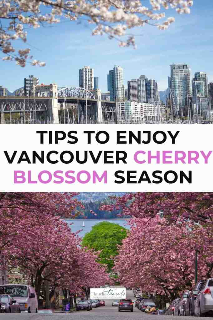 vancouver city skyline with cherry blossoms