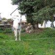 ... und einem Seiltanz-Pferd ...