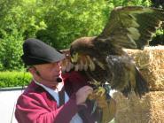 Der arme Adler.
