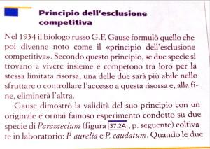 Principio dell'esclusione competitiva - cosa c' entra con il processo di posizionamento