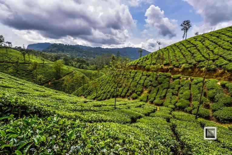 India - Tamil Nadu - Valparai-11