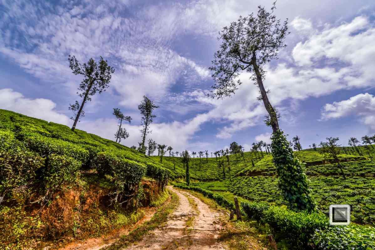 India - Tamil Nadu - Valparai-9