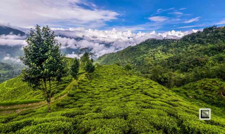 India - West Begal - Darjeeling-14