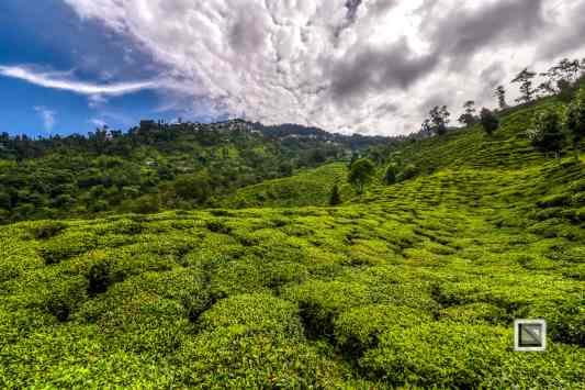 India - West Begal - Darjeeling-18