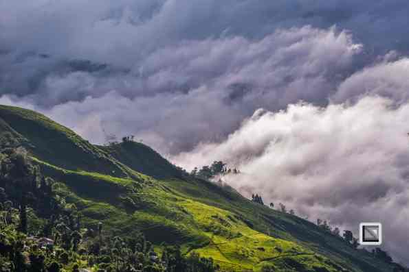 India - West Begal - Darjeeling-29