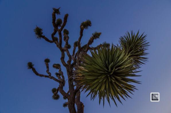 USA - California - Joshua national park-5