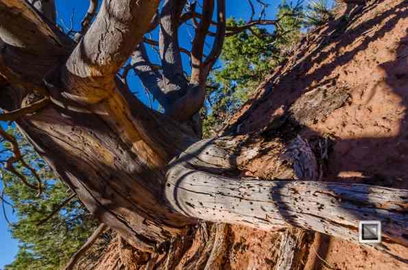 USA - Utah - Arches National Park-32