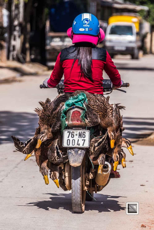 Ly_Son_2-Vietnam (1 von 18)
