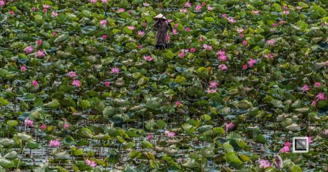 Rice_Fields-Vietnam (4 von 21)